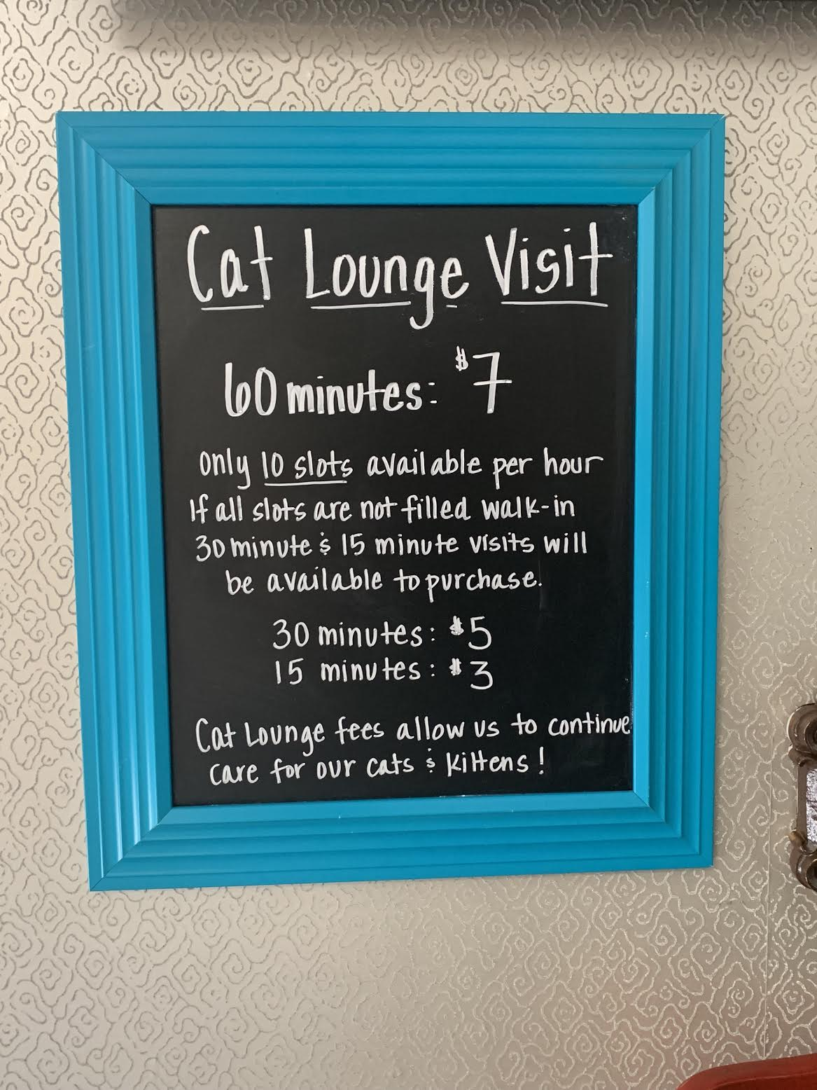 Cattfeinated Cat Cafe, Greensburg's cat cafe is now open! - Downtown  Greensburg Project